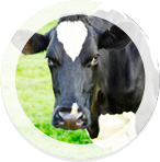 Cow and Thorvin Animal Feed Supplements