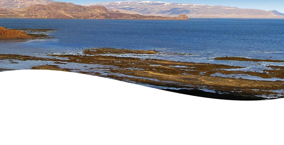 Thorvin Kelp Harvest