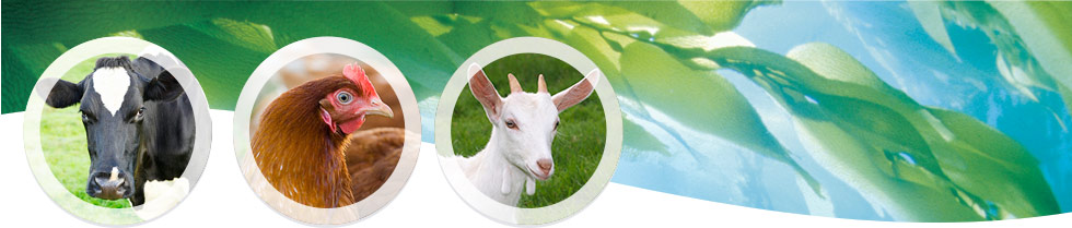 Livestock Thorvin